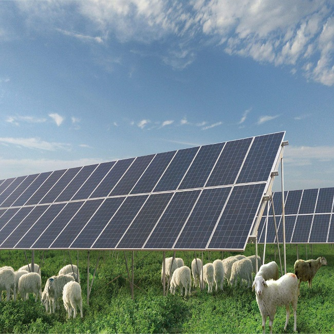 Malaysia Has Announced an Ambitious 1 GW Agricultural Photovoltaic Livestock Project